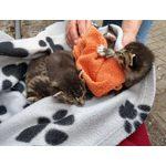 Katzenbabys nach der Rettung