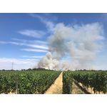 Flächenbrand Langgewann
