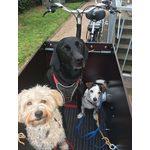 Hunde im Lastenfahrrad